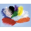 Ostrich Plumes Red